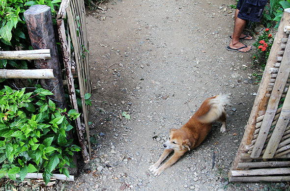 Dog stretching morning Palawan Philippines