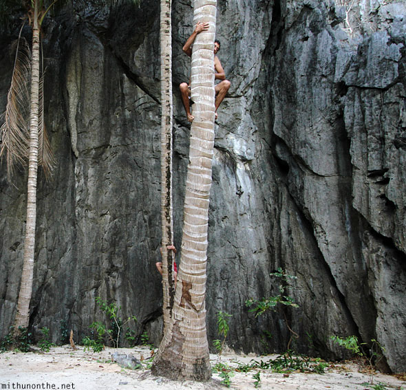 German youth climbing up coconut tree El Nido island