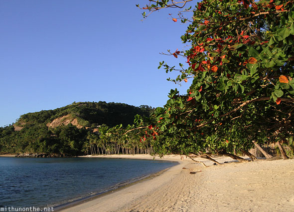 Las Cabanas beach red leaf tree Palawan sunset
