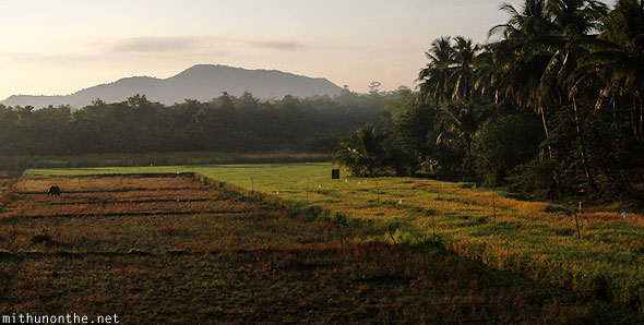 Puerto Princesa farm land early morning Palawan Philippines
