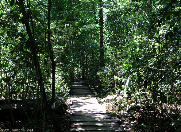 Puerto Princesa national park wooden path to river