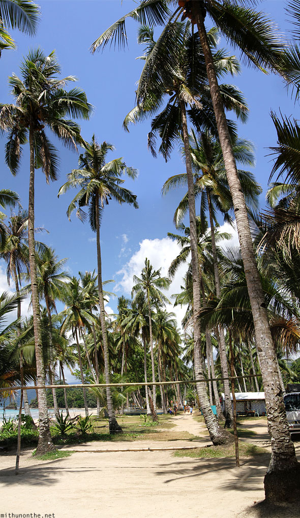 Sabang beach coconut trees Panorama Palawan