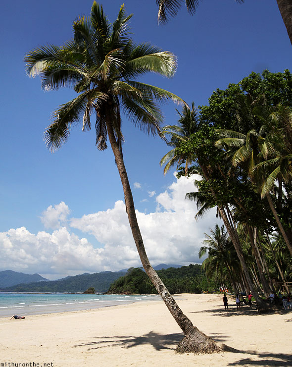 Sambang beach coconut tree Palawan Philippines Panorama
