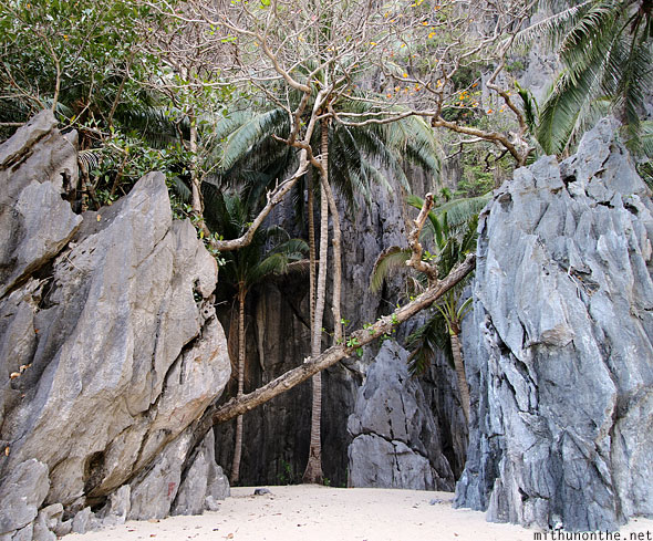 Secret beach trees rock El Nido Palawan Philippines