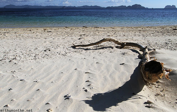 Seven commandos beach sand tree branch El Nido