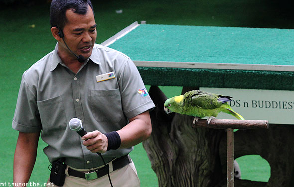 Amigo talking Amazon parrot Jurong Bird Park Singapore