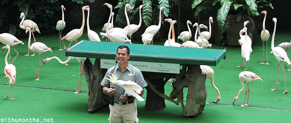 Birds n buddies show host Jurong bird park Singapore