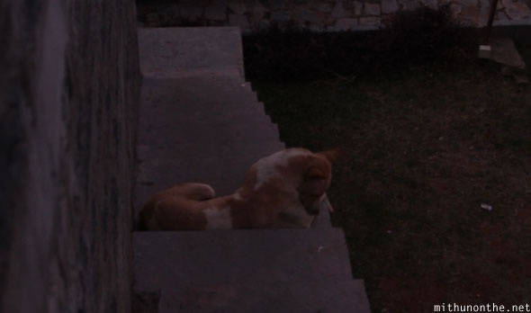 Gandikota hotel dog on steps