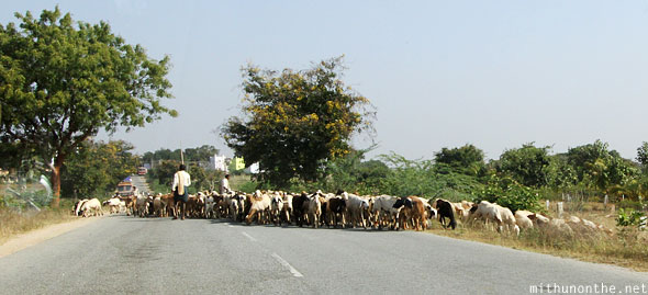 Goats blocking Indian road