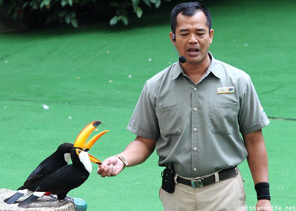 Jurong bird park staff feeding toucans Singapore