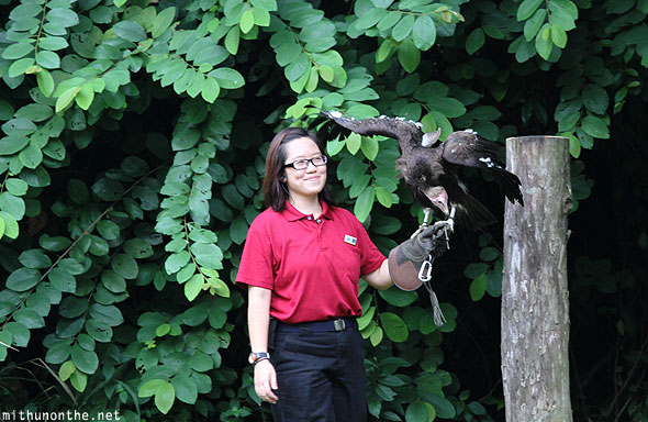 Jurong bird park staff lady with vulture Singapore