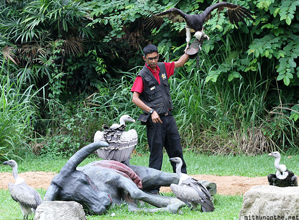 Jurong bird park vultures Singapore