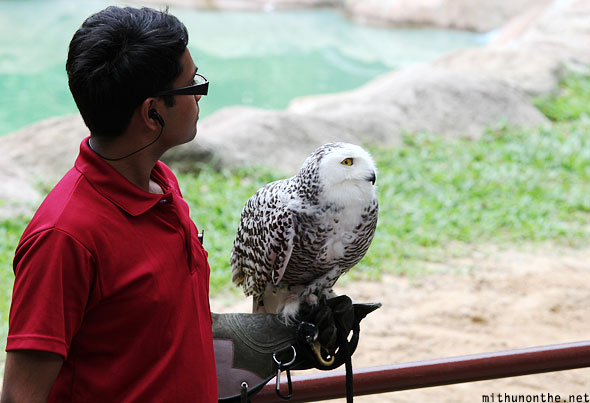 Jurong bird park white owl Singapore
