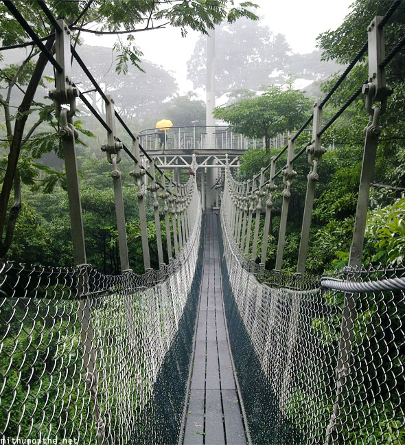 Lory loft hanging bridge Jurong bird park Singapore
