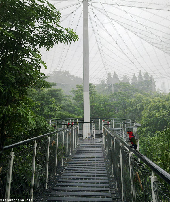 Lory loft netted bridge Jurong bird park Singapore