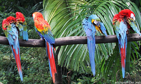 Macaw parrots heads turned back Jurong Singapore