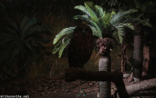 Night owl Jurong bird park Singapore