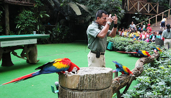 Parrots end of show Jurong bird park Singapore