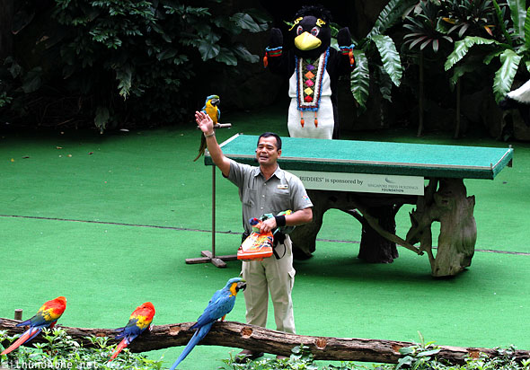 Parrots show end Jurong bird park Singapore