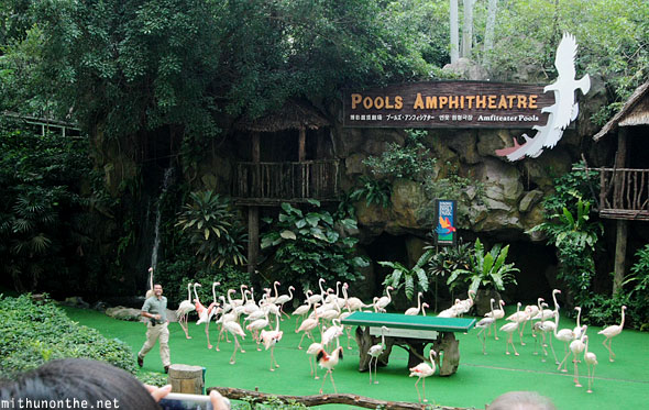 Pools amphitheatre birds buddies show Jurong bird park Singapore