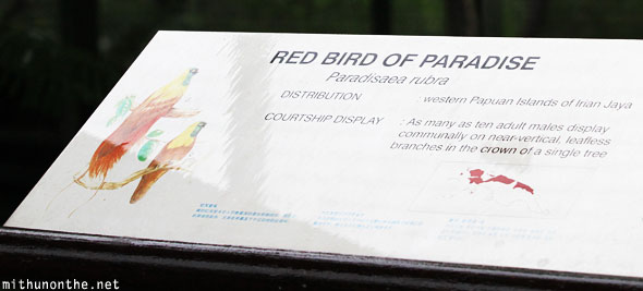 Red bird of paradise Jurong bird park Singapore