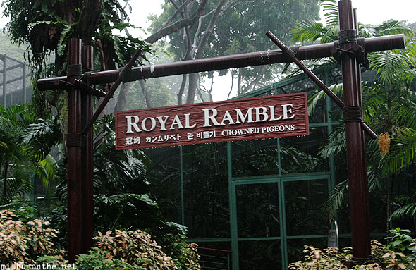 Royal ramble Jurong bird park Singapore