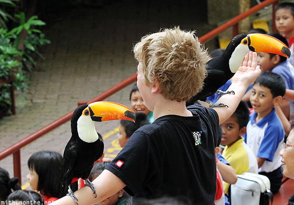 Toucans on boy Jurong bird park Singapore