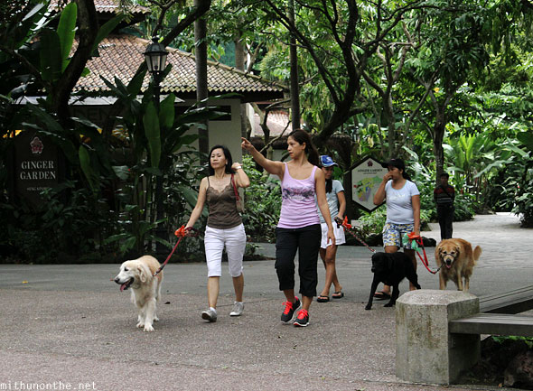 Dog walking Singapore botanic park