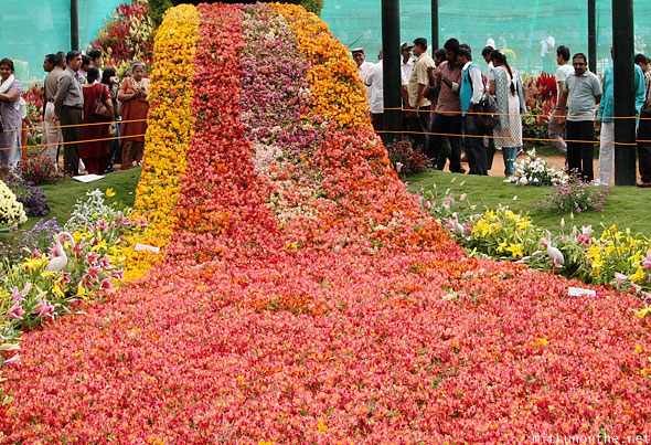 Flower wave out of pot Lal Bagh Bangalore floral show