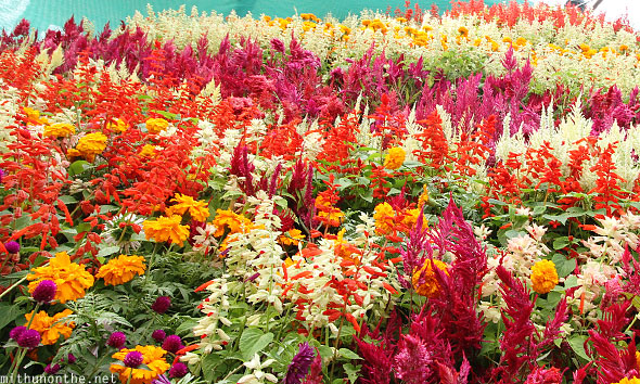 Gardening Group: Photos From The 2012 Lal Bagh Republic Day Flower Show