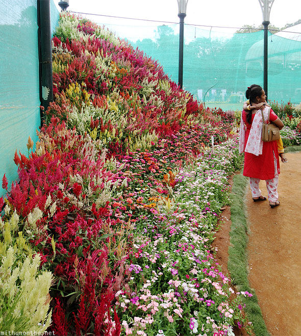 Group of annuals Lal Bagh glasshouse corner Bengaluru