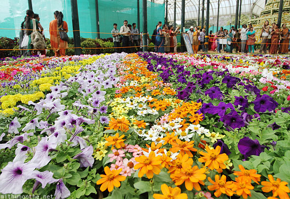 Group of annuals line of colours Lal Bagh display