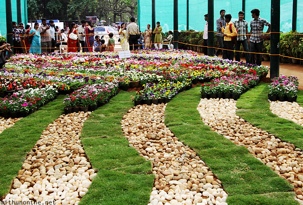 Group of annuals pebble display Lal Bagh glasshouse