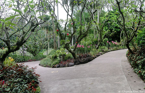 National orchid garden path ways Singapore