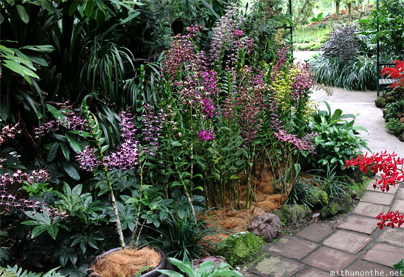 National orchid plants park mist room panorama