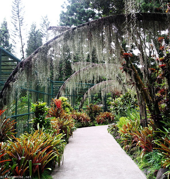Orchid park panorama