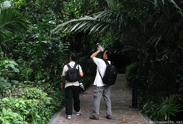 Photographers Singapore botanic garden