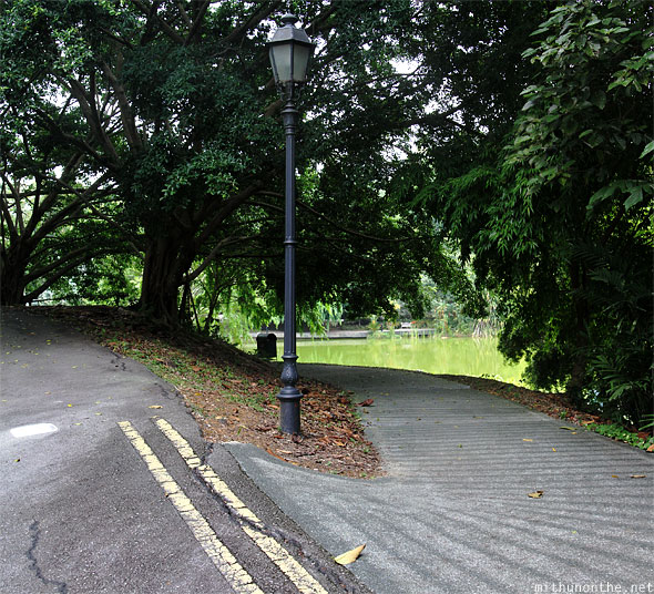 Way to Symphony lake Singapore botanic garden