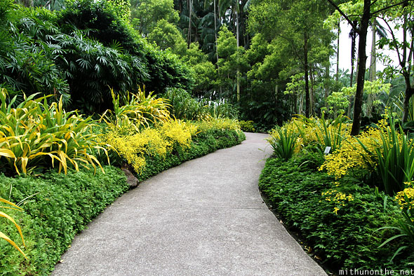 Yellow flowers plants path orchid park Singapore