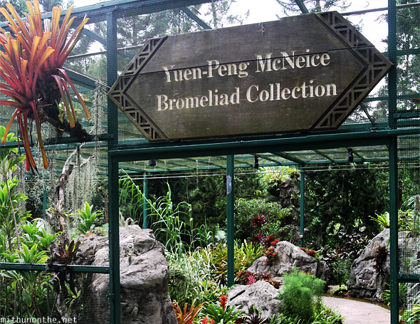 Yuen Peng McNeice bromeliad collection Singapore botanic park