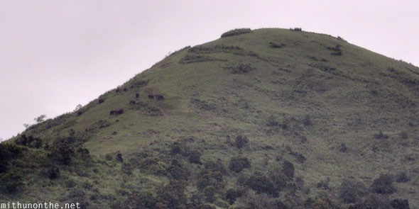 Elephants on hills Periyar Nature park Kerala