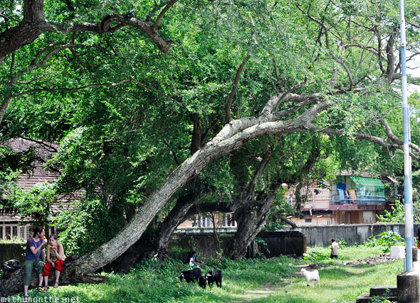 Fort Kochi tourists on tree park Kerala
