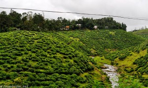 Idukki green hills Kerala India