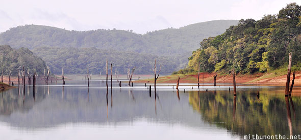 Periyar lake tree branches in water Thekkady