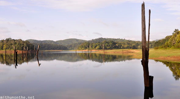 Periyar lake trees branches reflection in water Thekkady Kerala
