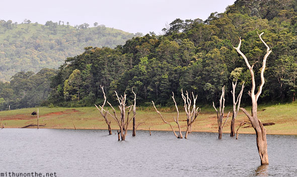 Periyar wildlife sanctuary trees lake Kerala India