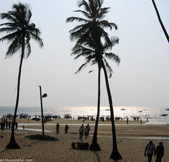 Colva beach coconut trees goa India