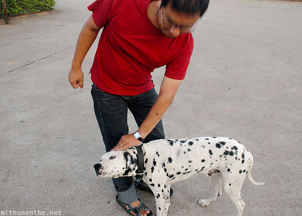 Loiyumba Dalmation dog
