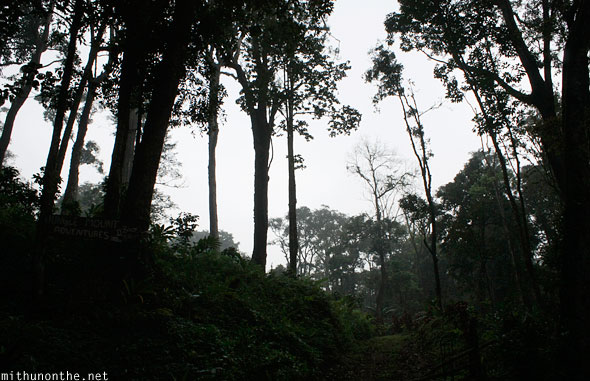 Thadiyandamol hill forest trees Coorg
