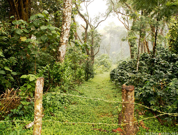 Thadiyandamol trek path Coorg